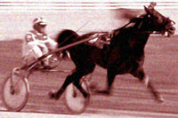 Trotting racing at kursaal
